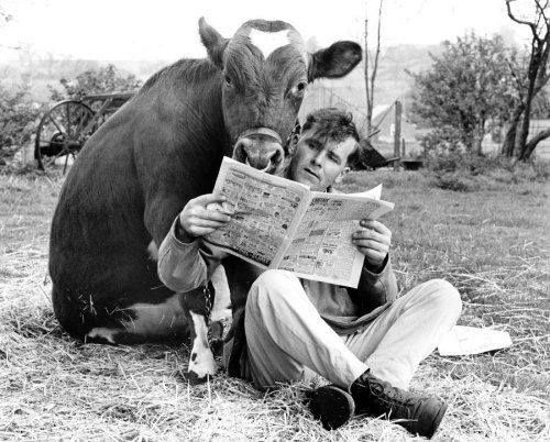 man-cow-reading-paper pinterest lit with a twist