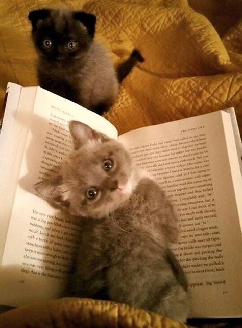 cats interrupting your book