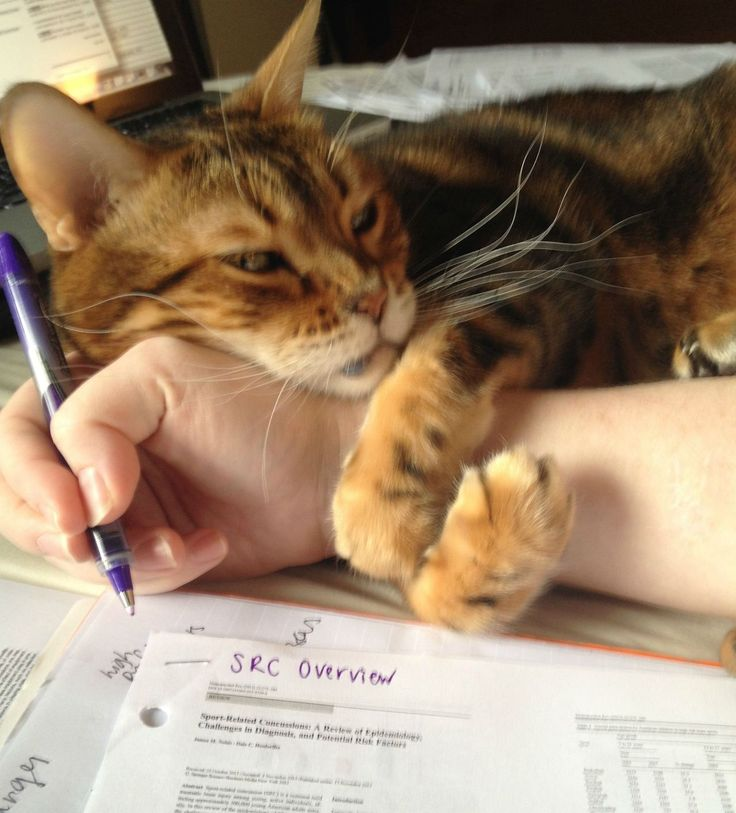 cat interrupting your writing