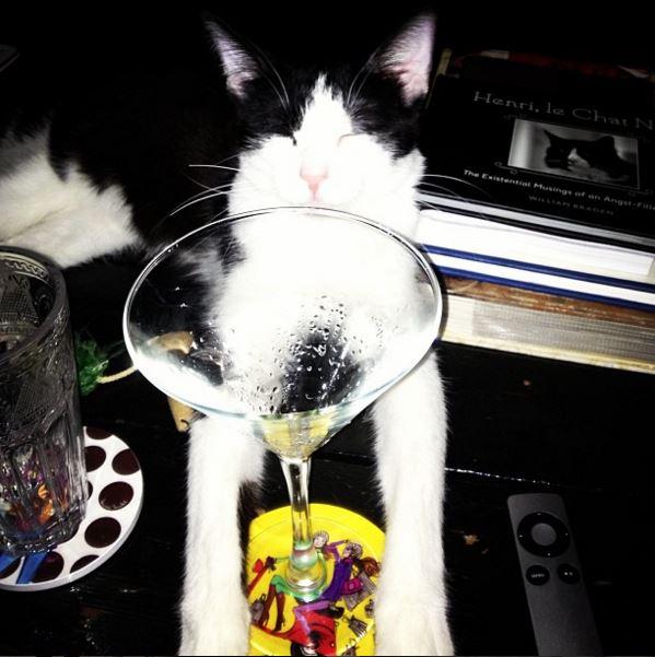 fitzgerald_martini