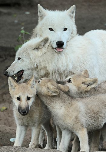 group wolf hug